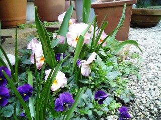 Flower080325